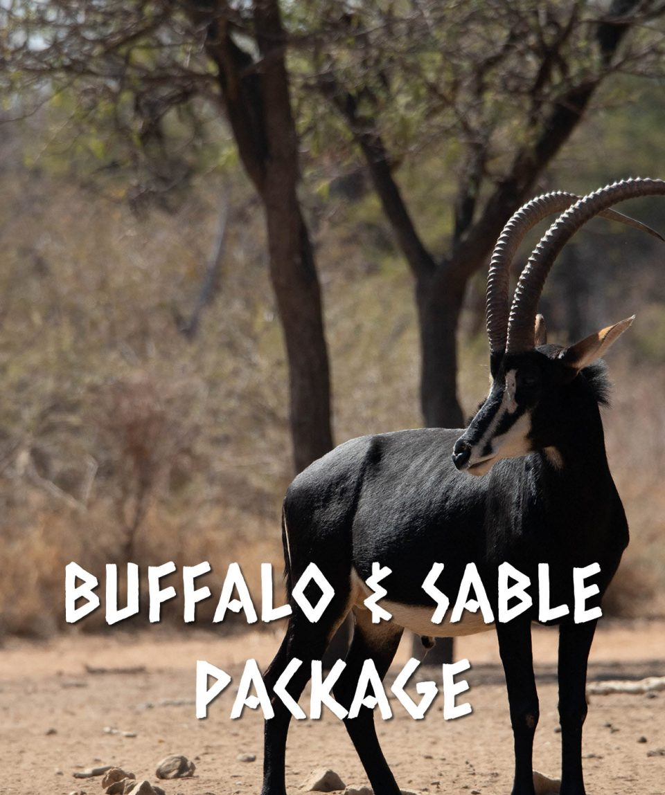 BUFFALO & SABLE PACKAGE
