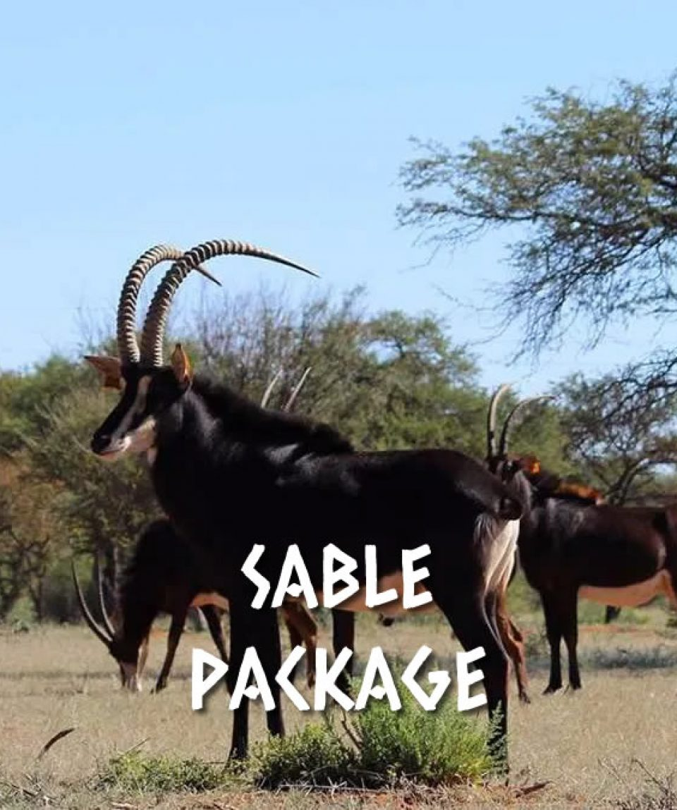 SABLE PACKAGE